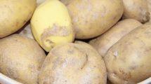Caparol_PlantaGeo_Kartoffeln.jpg